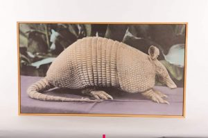 Lesson 2: Mike Tolleson, co-founded of Armadillo World Headquarters, kept this stuffed armadillo in his office. He named it Arturo.